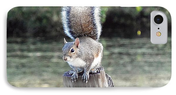 IPhone Case featuring the photograph Squirrel 035 by Chris Mercer