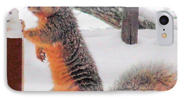 IPhone Case featuring the photograph Squirrel Checking Out Seeds by Janette Boyd