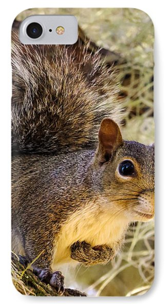 Squirrel Close IPhone Case by Zina Stromberg