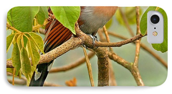 IPhone Case featuring the photograph Squirrel Cuckoo In Costa Rica by Peggy Collins