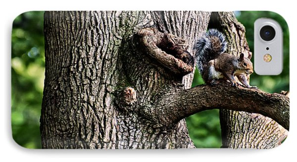 Squirrel Guarding Watering Knot IPhone Case by Chris Flees