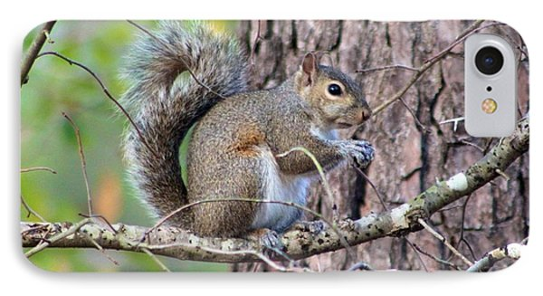 Squirrel In Forest IPhone Case by Jeanne Kay Juhos