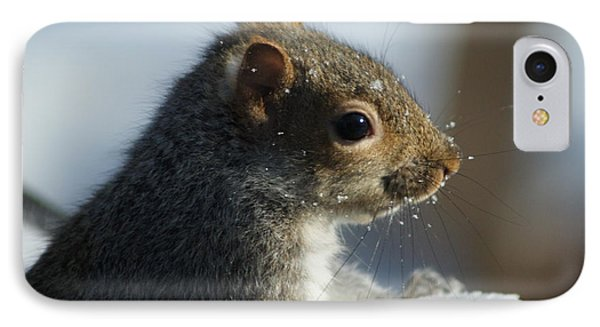 Squirrel In Snow IPhone Case by Lois Lepisto