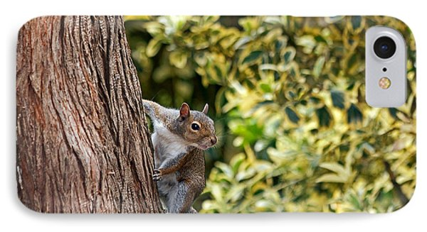 IPhone Case featuring the photograph Squirrel by Kate Brown