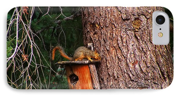 Squirrel On Top Of Birdhouse IPhone Case by Chris Flees