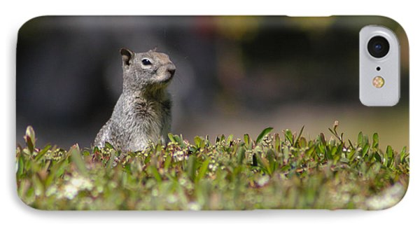 IPhone Case featuring the photograph Spy Squirrel  by Richard Stephen