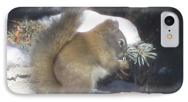 Squirrel Three IPhone Case by Cathy Long