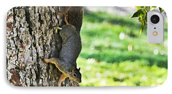 Squirrel With Pecan IPhone Case by Debbie Portwood