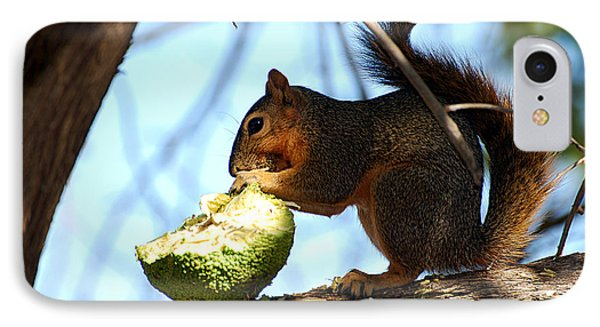 IPhone Case featuring the photograph Squirrel's Delicacy by Linda Cox