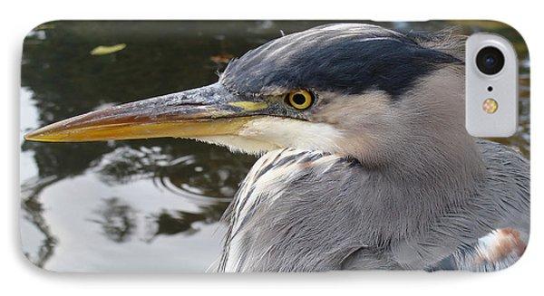 Sr Heron  IPhone Case by Cheryl Hoyle