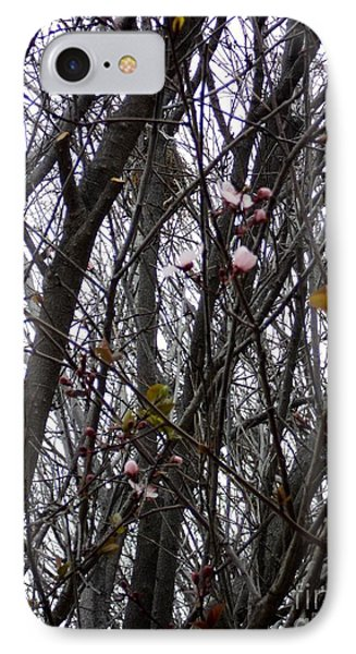 IPhone Case featuring the photograph Spring Blossoms by Carla Carson