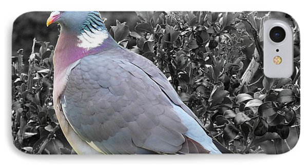 St. Andrews Pigeon IPhone Case by Deborah Smolinske