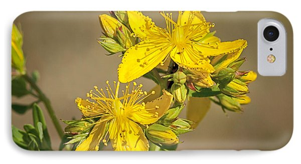 St Johns Wort IPhone Case by Betty Depee