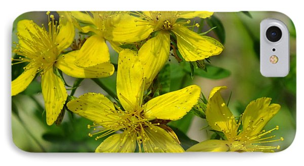 IPhone Case featuring the photograph St John's Wort by Gene Cyr