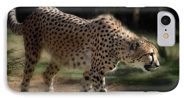 Stalking Cheetah  IPhone Case by Joseph G Holland