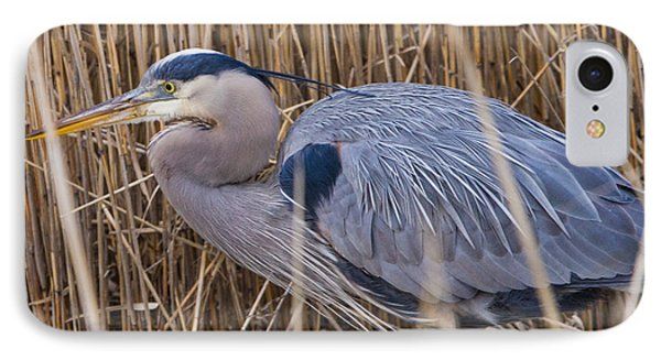 Stalking Fish In The Reeds IPhone Case by Allan Levin