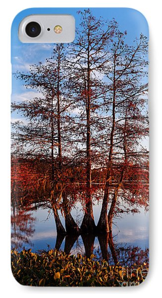 Stand Of Bald Cypress Trees At Ba Steinhagen Lake In Martin Dies Jr State Park - Jasper East Texas IPhone Case