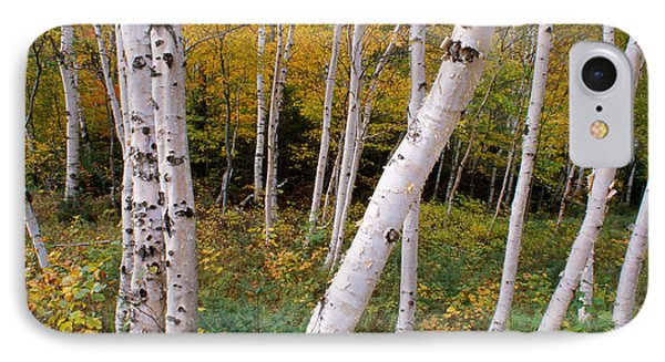 Stand Of White Birch Trees IPhone Case by Panoramic Images