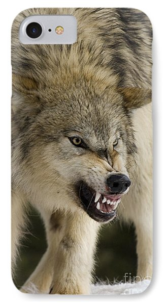 Stand Off IPhone Case by Wildlife Fine Art