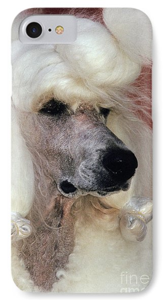 Standard Poodle Groomed For A Dog Show IPhone Case