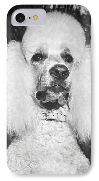 Standard Poodle Phone Case by ME Browning
