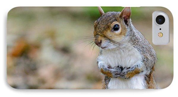 Standing Squirrel IPhone Case by Matt Malloy