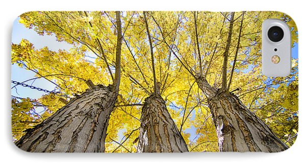 Standing Tall Autumn Maple IPhone Case by James BO  Insogna