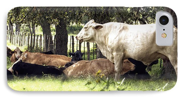 Standing Watch Cattle Photographic Art Print IPhone Case by Ella Kaye Dickey