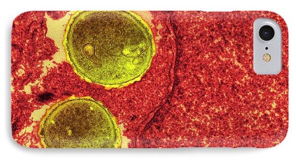 Staphylococcus Aureus Bacteria IPhone Case by Ami Images