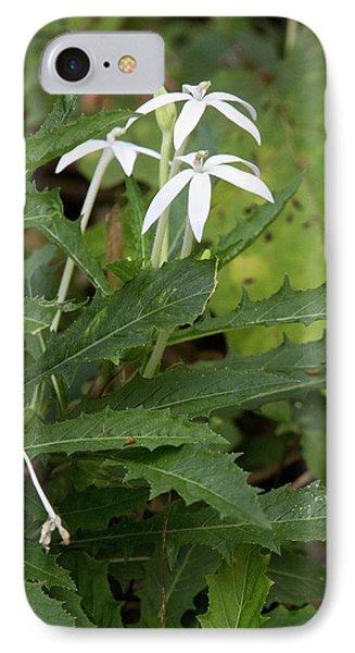 Star Flower (hippobroma Longiflora) IPhone Case by Bob Gibbons
