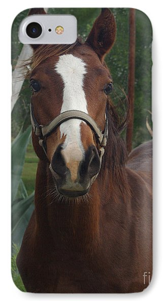 IPhone Case featuring the photograph Stared Down by Peter Piatt