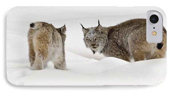 Staredown IPhone Case by Dee Cresswell