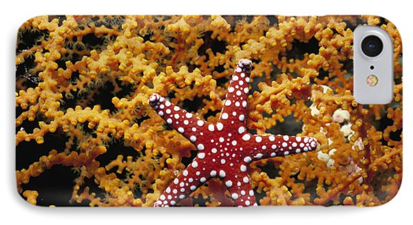 Starfish Feeding On Coral In The Red Sea IPhone Case