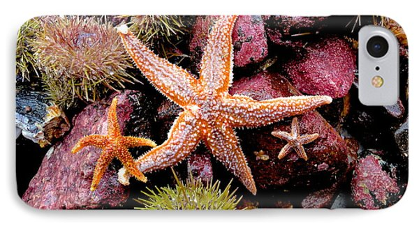 IPhone Case featuring the photograph Starfish by Sarah Mullin
