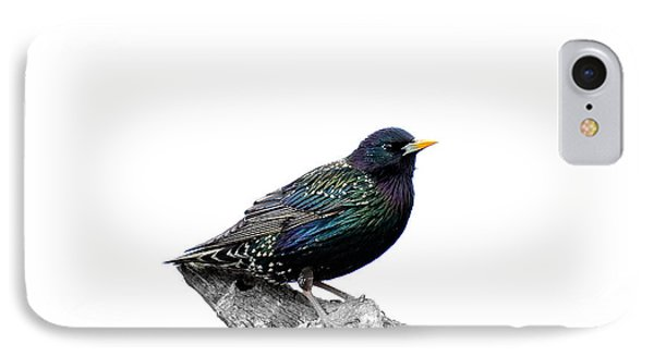 Starling On Roof IPhone Case