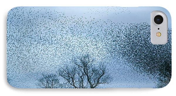 Starlings Flying To Roost IPhone Case