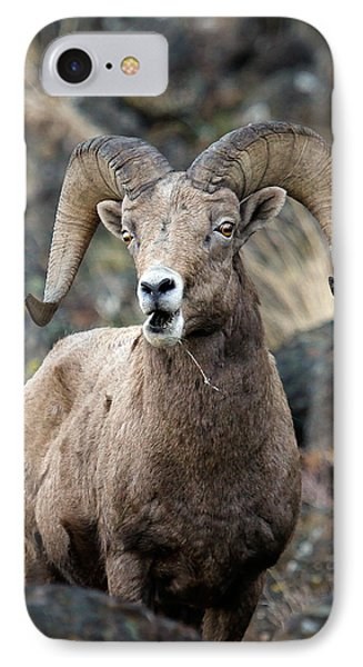 IPhone Case featuring the photograph Startled Ram by Steve McKinzie