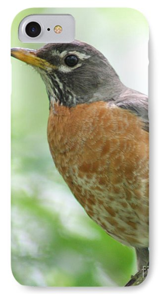 IPhone Case featuring the photograph Stately Robin by Anita Oakley