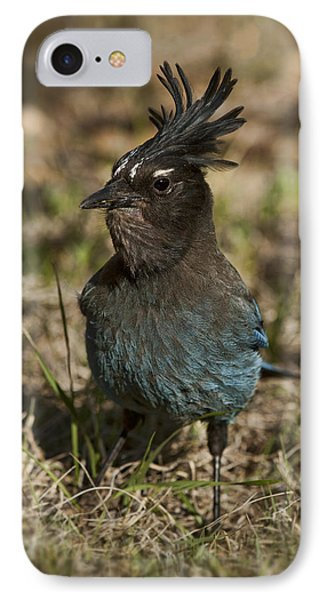 IPhone Case featuring the photograph Stellar's Jay - Inland Race by Gregory Scott