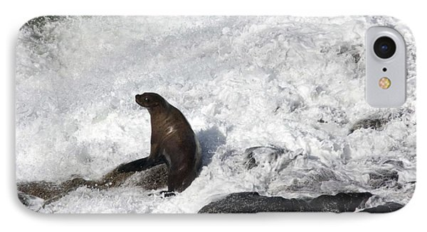 Steller Sea Lion - 0034 IPhone Case