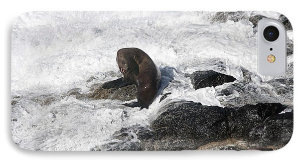 Steller Sea Lion - 0035 IPhone Case