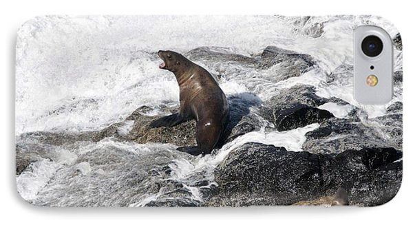 Steller Sea Lion - 0036 IPhone Case
