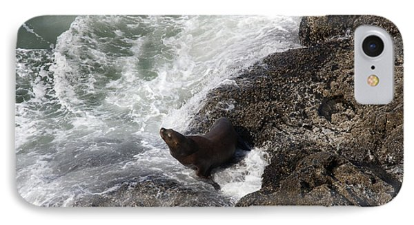 Steller Sea Lion - 0045 IPhone Case