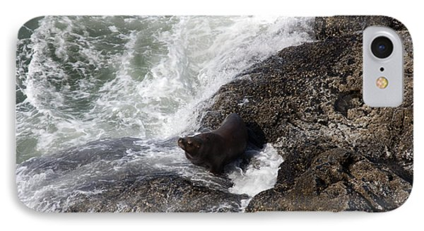 Steller Sea Lion - 0046 IPhone Case