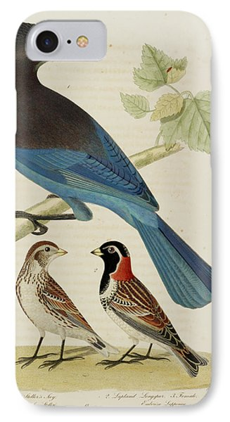 Steller's Jay. Lapland Longspur. Female IPhone Case by British Library