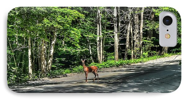 Sterling Valley Doe IPhone Case by John Nielsen