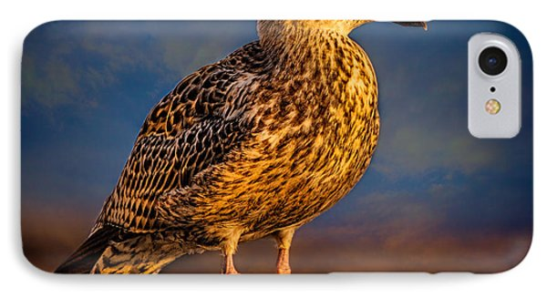 Steven Seagull IPhone Case by Chris Lord