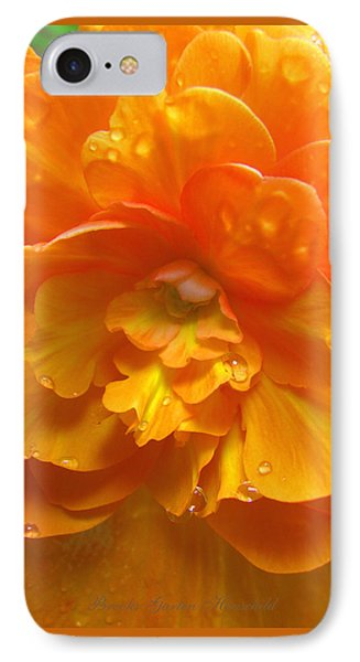 Still The One - Images From The Garden IPhone Case by Brooks Garten Hauschild