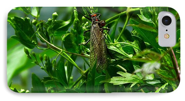 Stonefly  IPhone Case by Janice Westerberg