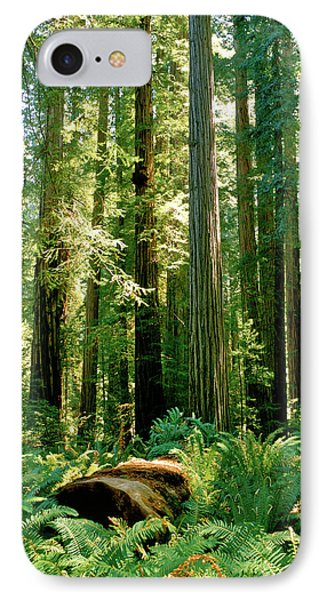 Stout Grove Coastal Redwoods IPhone Case by Ed  Riche